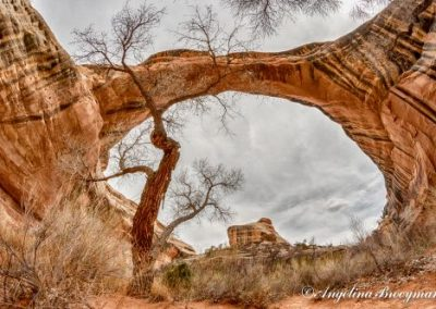 #4 Tree in Arch by Angelina Brooymans