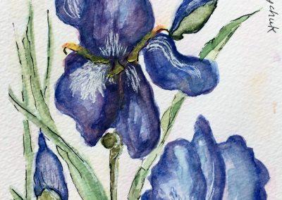 #29 Irises by Mary Boychuk