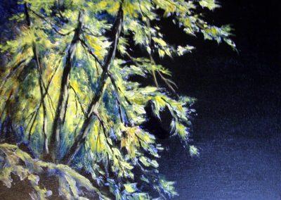 Backlit by Judy Mackenzie