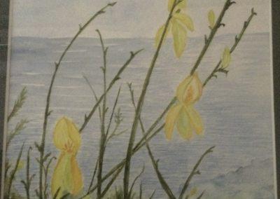 #60 Gorse on Mayne Island by Johanna Walters