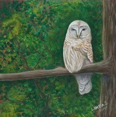 #170 Barred Owl by Linda Scarfo